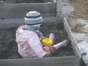 Jade planting Cheerios