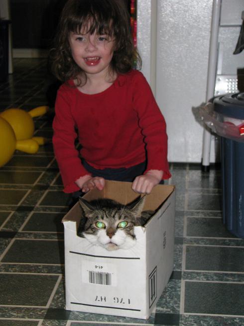 kitty-boat